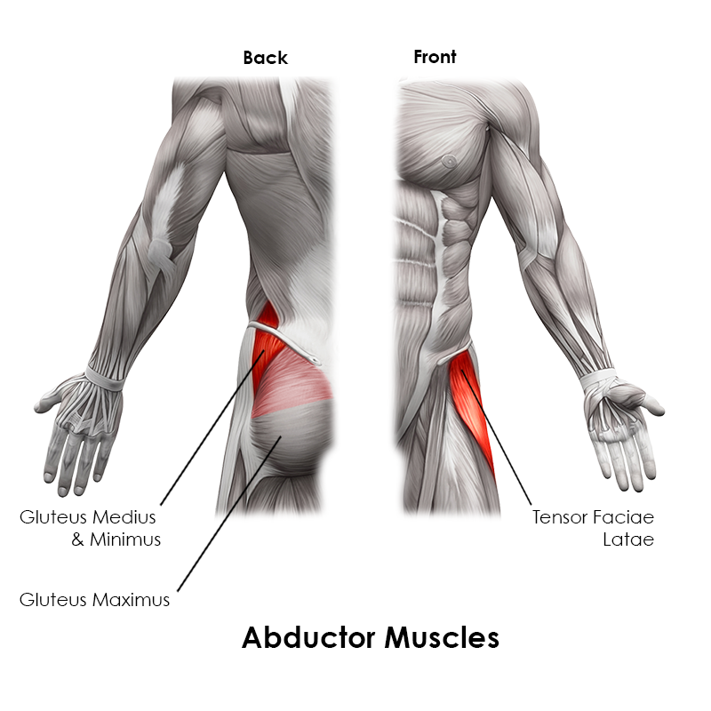 Abductor Muscles